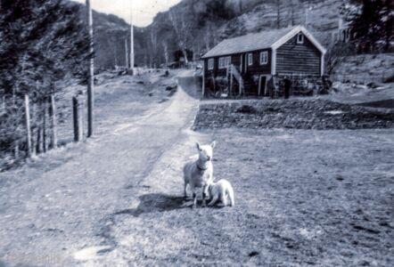 ca 1960 - Rugsund